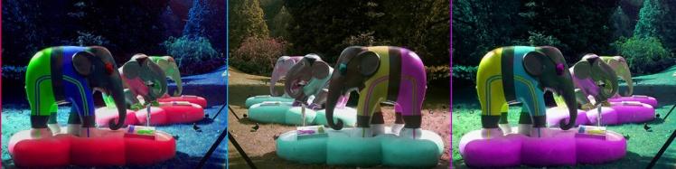 elephant copie