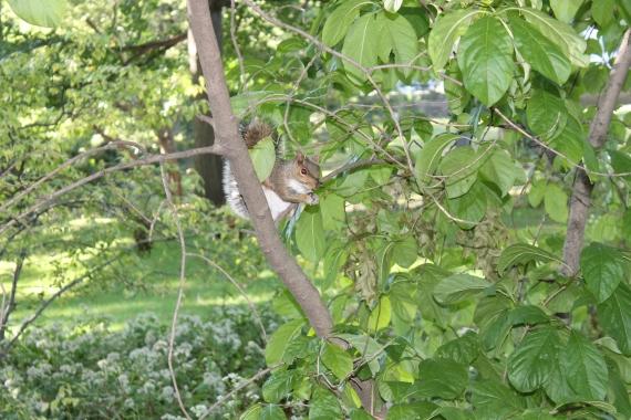 Hi 5 from a squirrel / Tope-là d'un écureuil