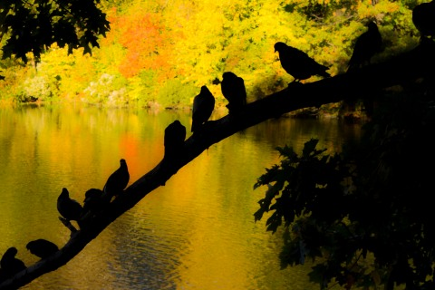 Central Park Birds