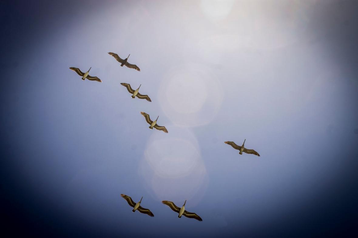 Birds High in the Sky
