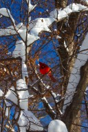 A bird in the trees