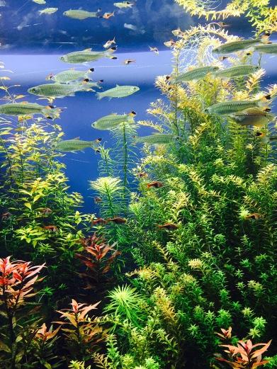 Atlanta - Aquarium