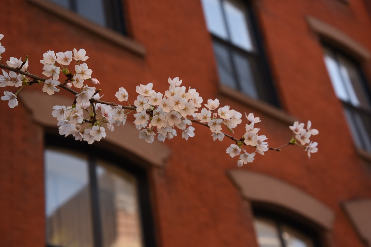 Blossom - West Village NYC