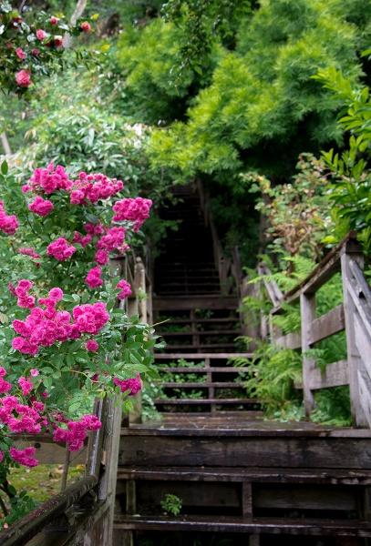 Hidden Stairways San Francisco