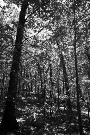 Breakneck Ridge - Into the woods