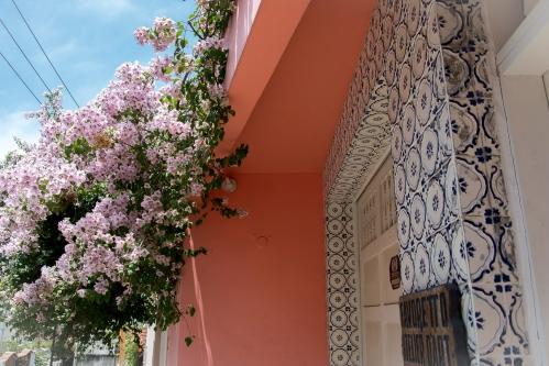 Spring blossom in Santa Teresa