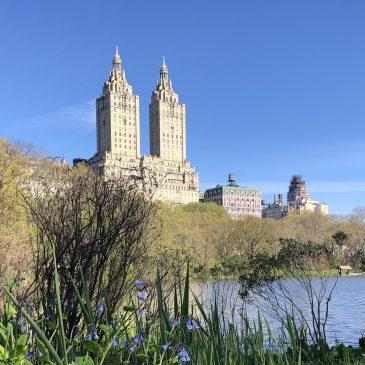 Morning walk in Central Park, West side